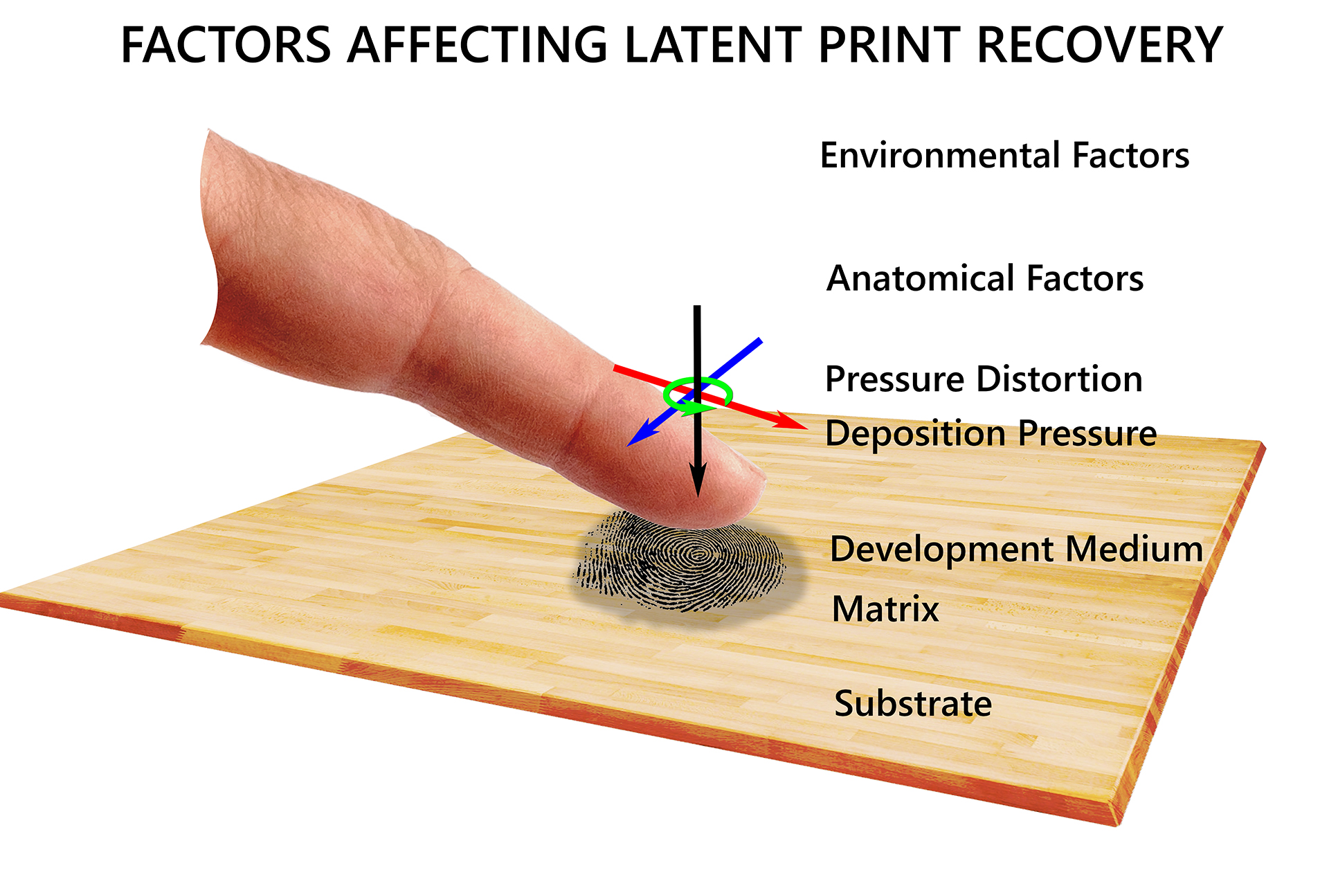 Fingerprint_Factors